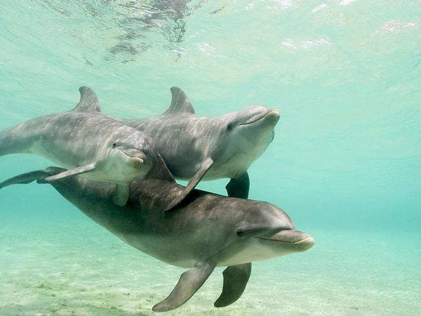 Los delfines en el embarazo - parte 1