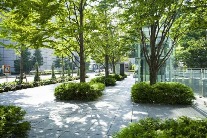 Las ciudades deben pensar en los árboles como una infraestructura de salud pública